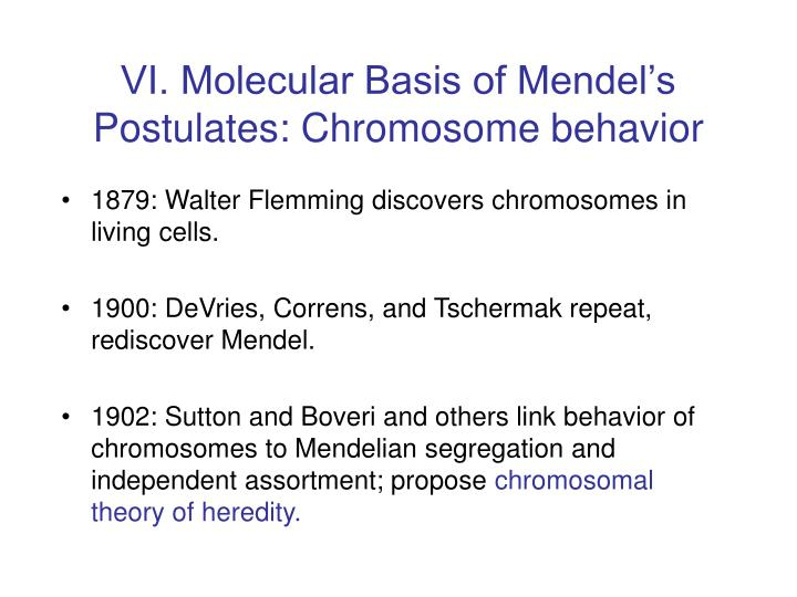 VI. Molecular Basis of Mendel's Postulates: Chromosome behavior