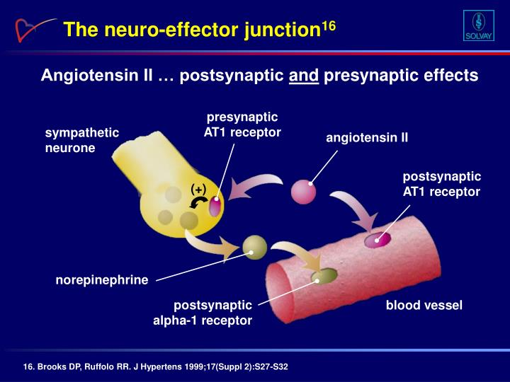 presynaptic AT1 receptor