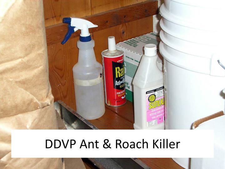 DDVP Ant & Roach Killer