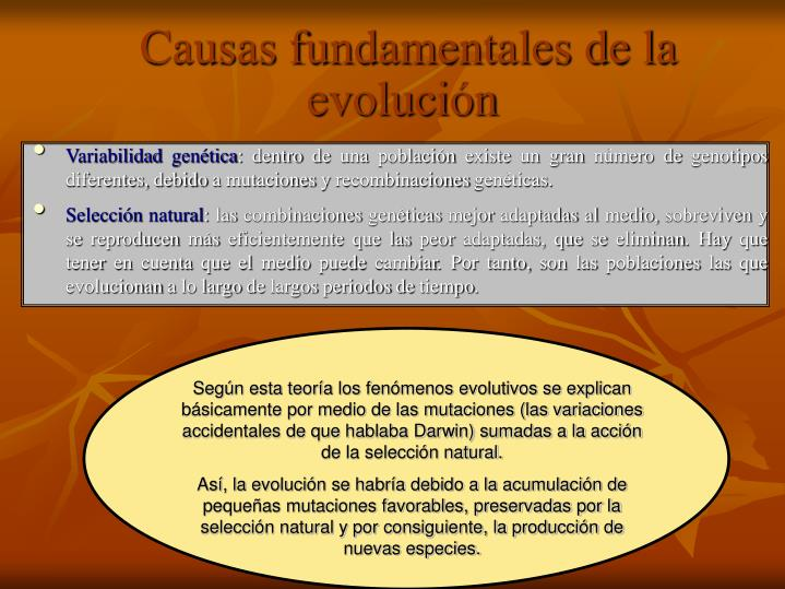 Según esta teoría los fenómenos evolutivos se explican básicamente por medio de las mutaciones (las variaciones accidentales de que hablaba Darwin) sumadas a la acción de la selección natural.