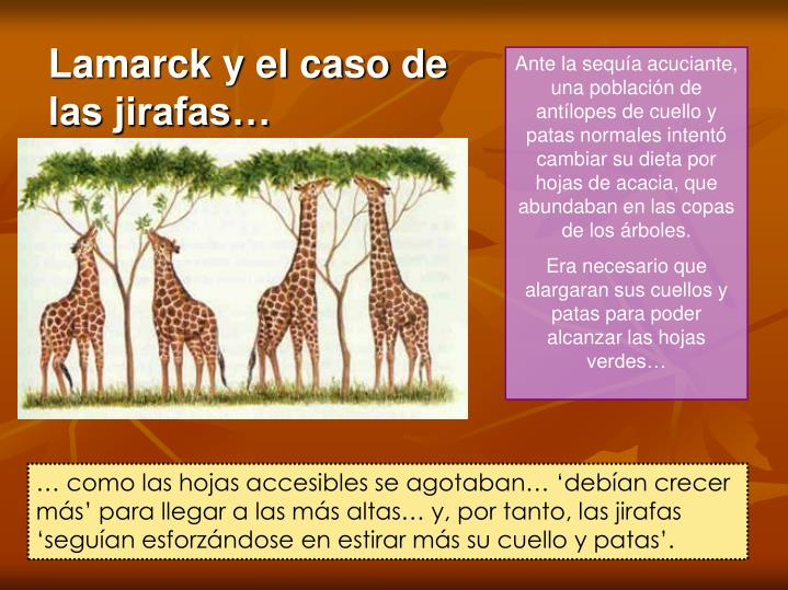 Lamarck y el caso de las jirafas…