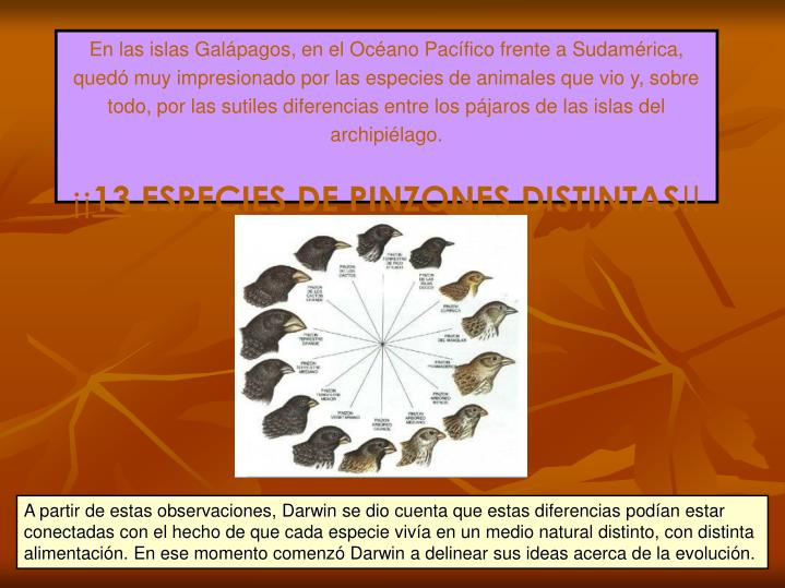 En las islas Galápagos, en el Océano Pacífico frente a Sudamérica, quedó muy impresionado por las especies de animales que vio y, sobre todo, por las sutiles diferencias entre los pájaros de las islas del archipiélago.