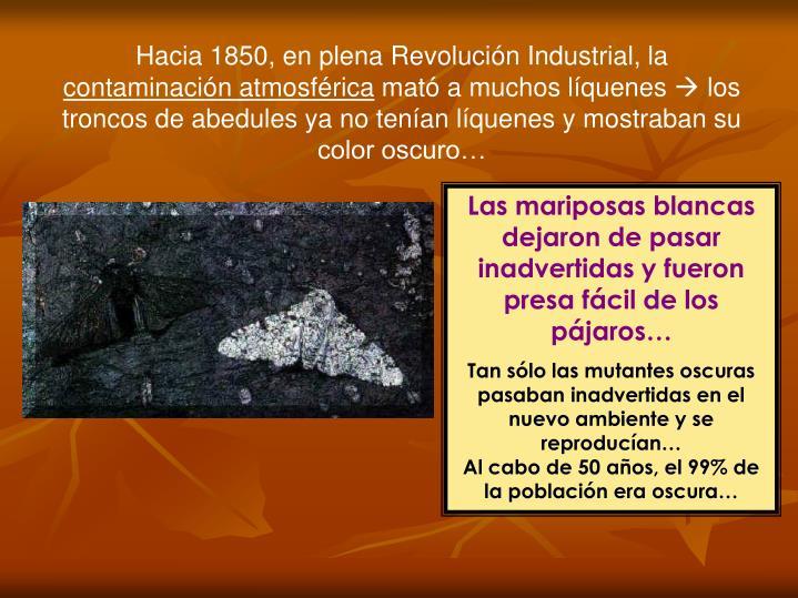 Hacia 1850, en plena Revolución Industrial, la