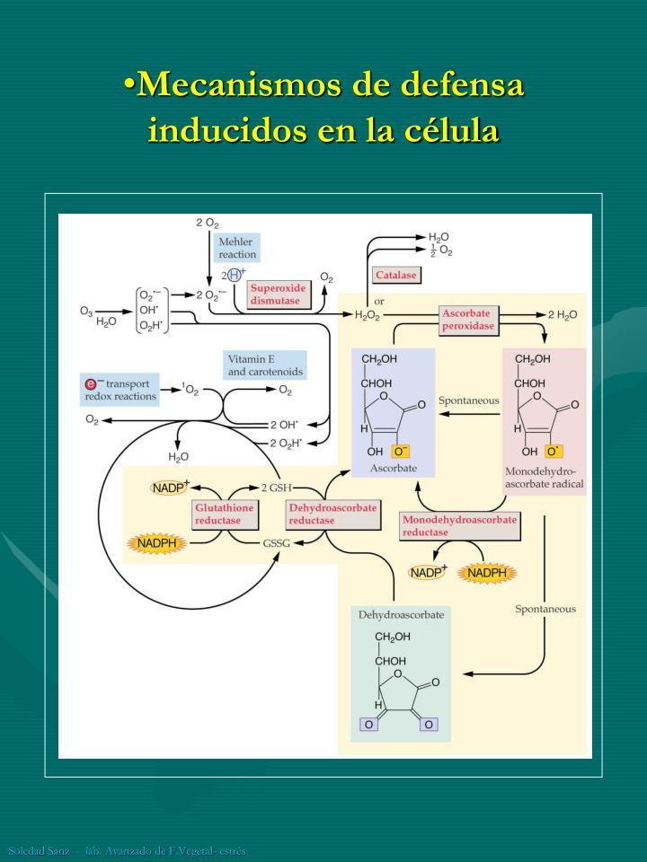 Mecanismos de defensa inducidos en la célula