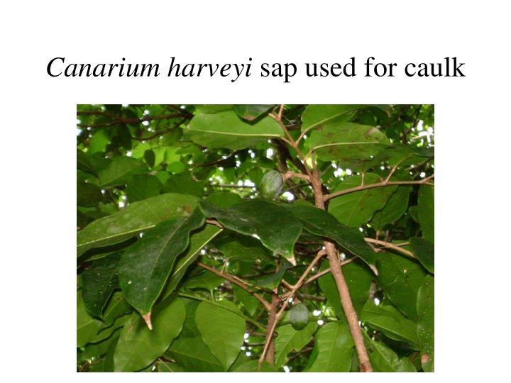 Canarium harveyi