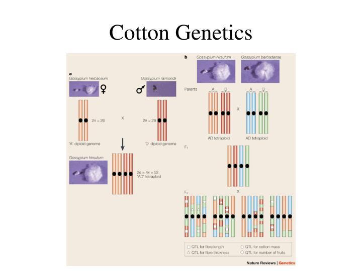 Cotton Genetics