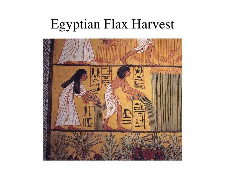 Egyptian Flax Harvest
