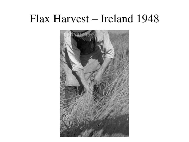 Flax Harvest – Ireland 1948