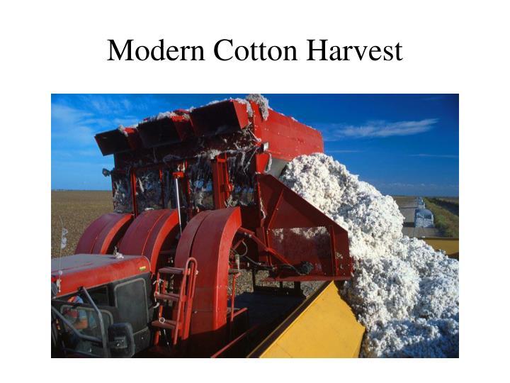 Modern Cotton Harvest