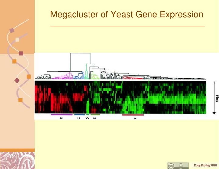 Megacluster of Yeast Gene Expression
