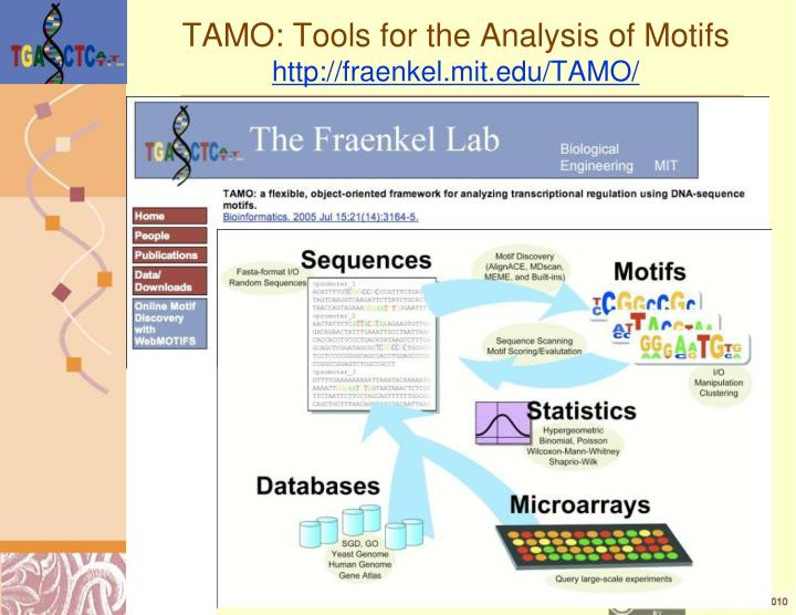 TAMO: Tools for the Analysis of Motifs