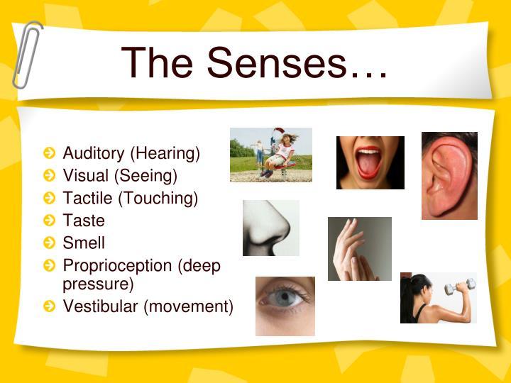 The Senses…