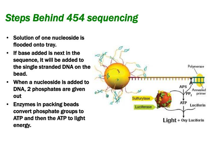 Steps Behind 454 sequencing