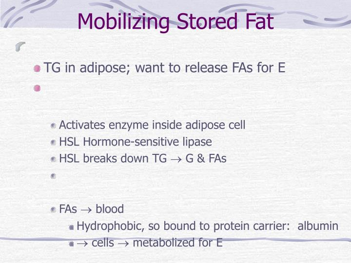 Mobilizing Stored Fat
