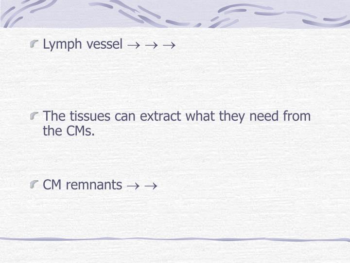 Lymph vessel