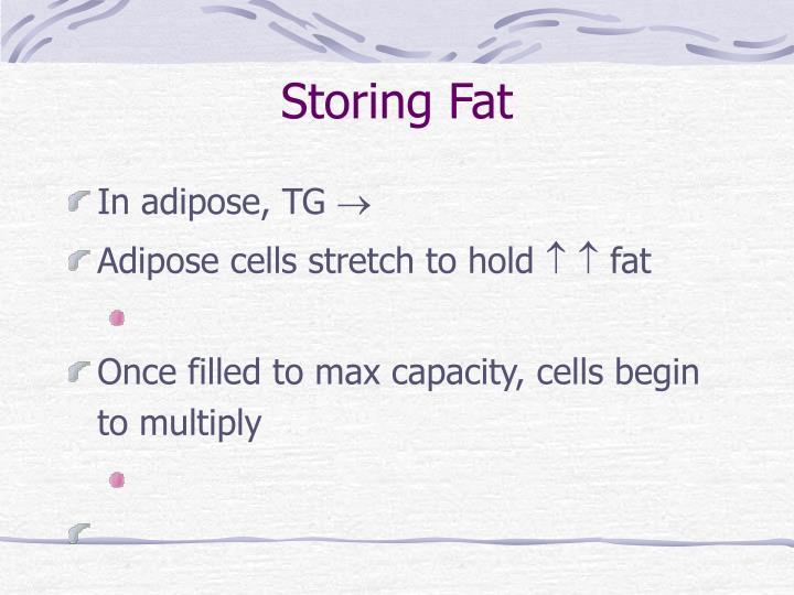 Storing Fat