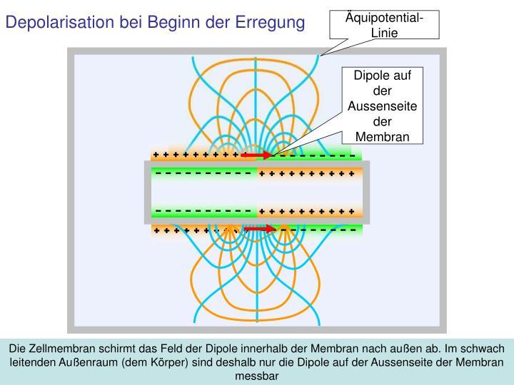 Äquipotential-Linie