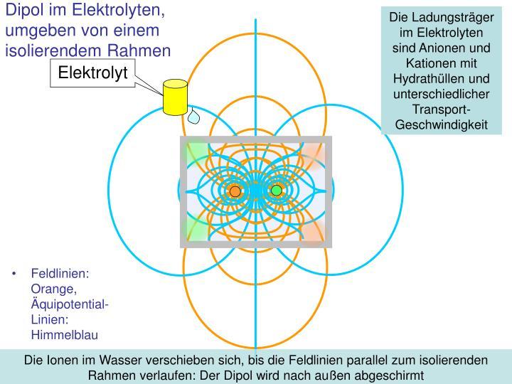 Die Ladungsträger im Elektrolyten sind Anionen und Kationen mit Hydrathüllen und unterschiedlicher Transport-Geschwindigkeit
