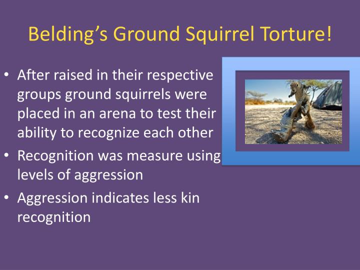 Belding's Ground Squirrel Torture!