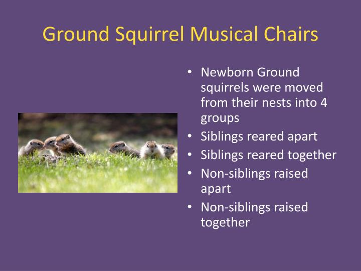Ground Squirrel Musical Chairs