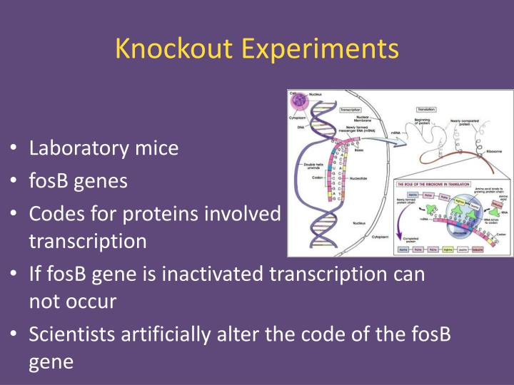 Knockout Experiments