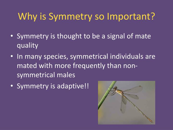Why is Symmetry so Important?