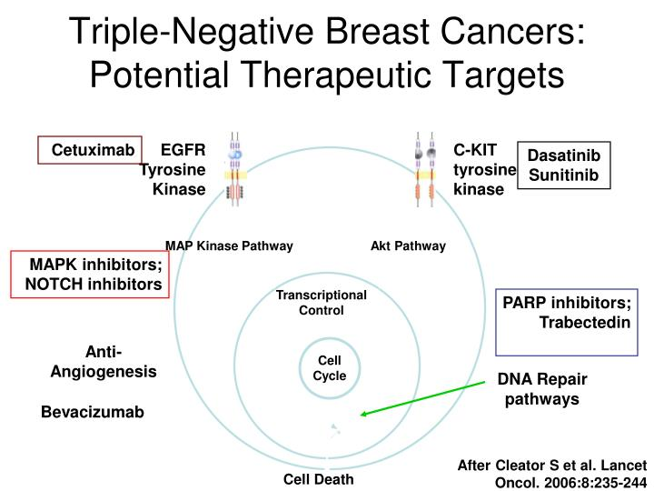 Triple-Negative Breast Cancers:  Potential Therapeutic Targets