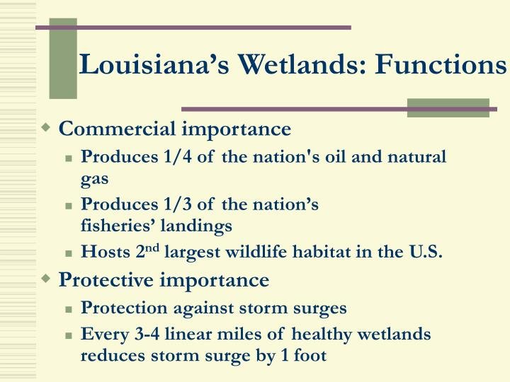 Louisiana's Wetlands: Functions