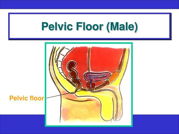 Pelvic Floor (Male)