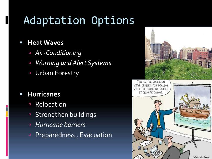 Adaptation Options