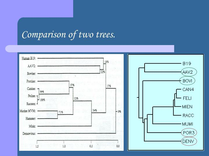 Comparison of two trees.