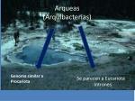 arqueas arquibacterias