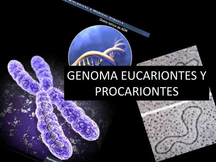 GENOMA EUCARIONTES Y PROCARIONTES