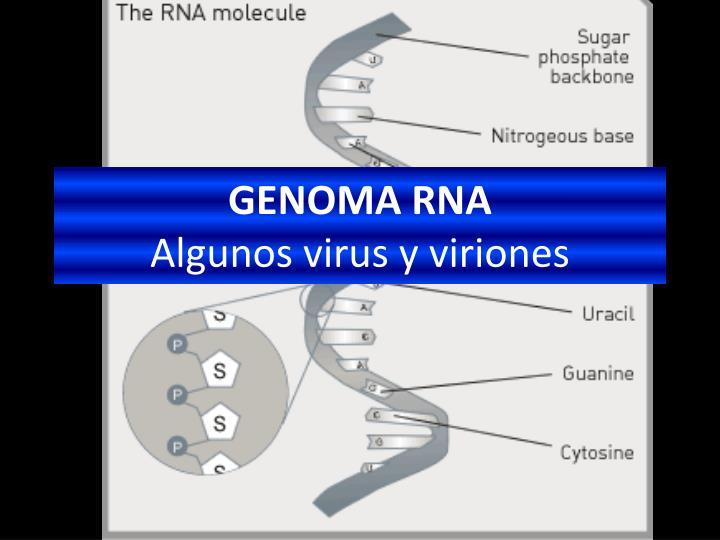 GENOMA RNA