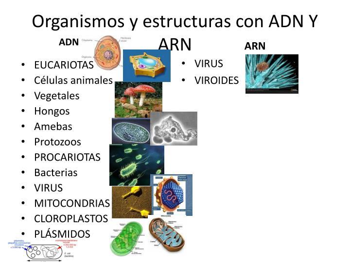 Organismos y estructuras con ADN Y ARN
