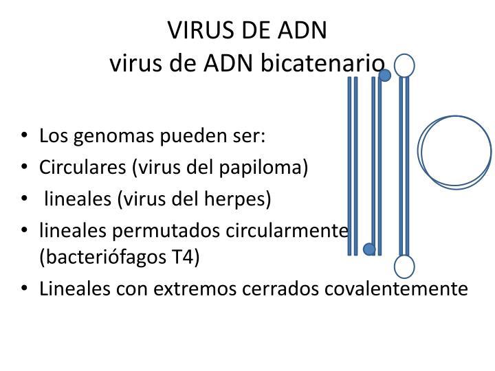 VIRUS DE ADN