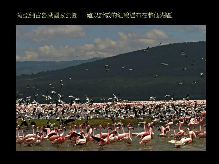 肯亞納古魯湖國家公園   難以計數的紅鶴遍布在整個湖區