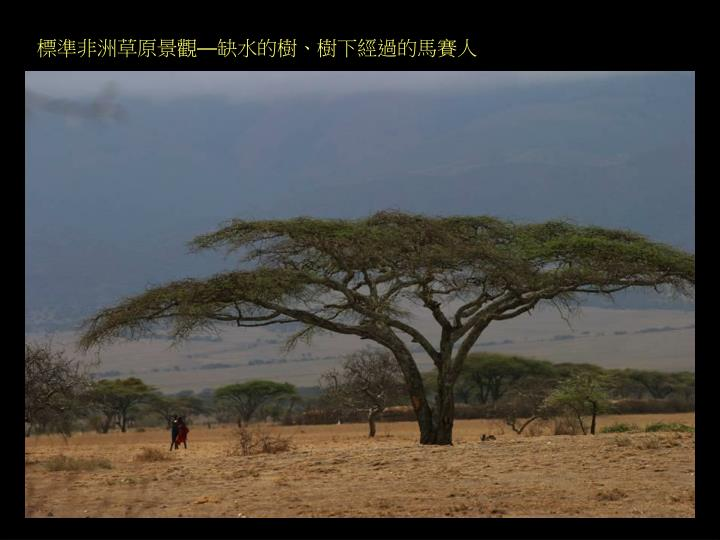 標準非洲草原景觀