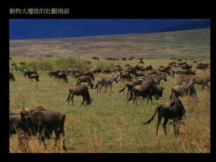 動物大遷徙的壯觀場面