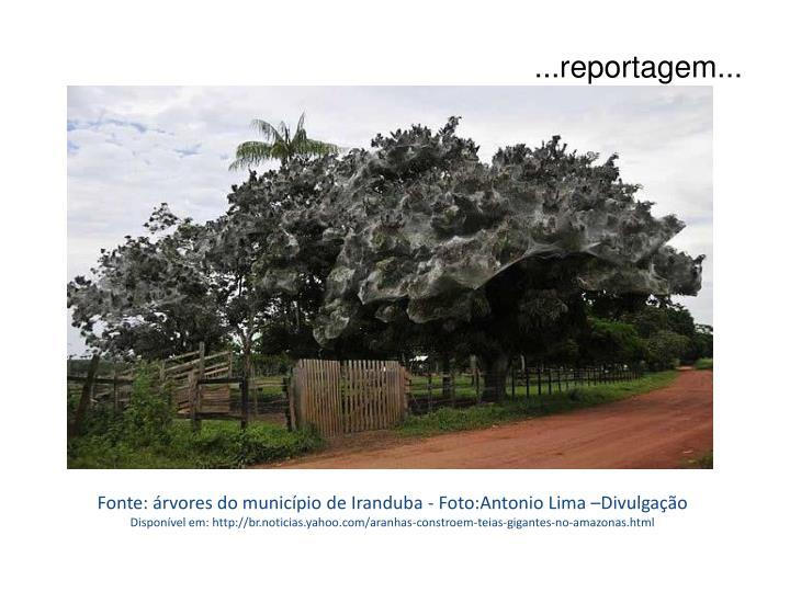 Fonte: árvores do município de Iranduba - Foto:Antonio Lima –Divulgação