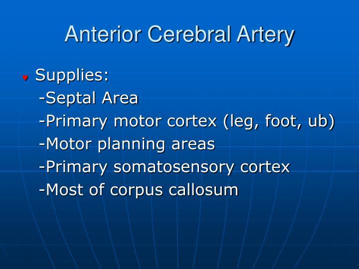 Anterior Cerebral Artery