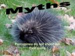porcupines do not shoot out their quills