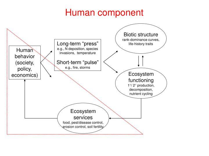 Human component