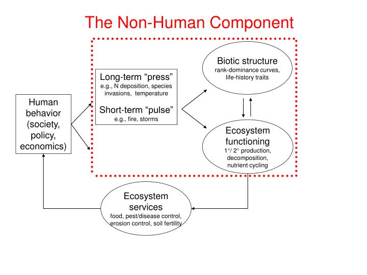 The Non-Human Component