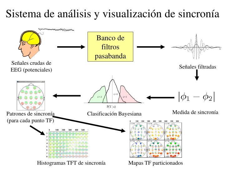 Sistema de análisis y visualización de sincronía