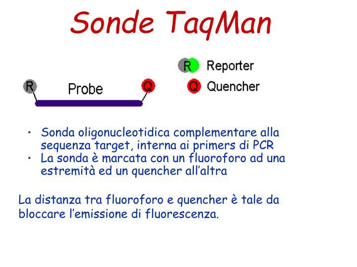 Sonde TaqMan