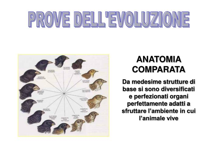 PROVE DELL'EVOLUZIONE