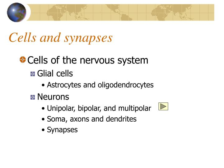 Cells and synapses