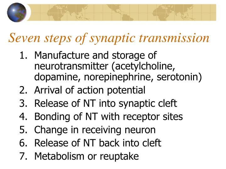 Manufacture and storage of neurotransmitter (acetylcholine, dopamine, norepinephrine, serotonin)