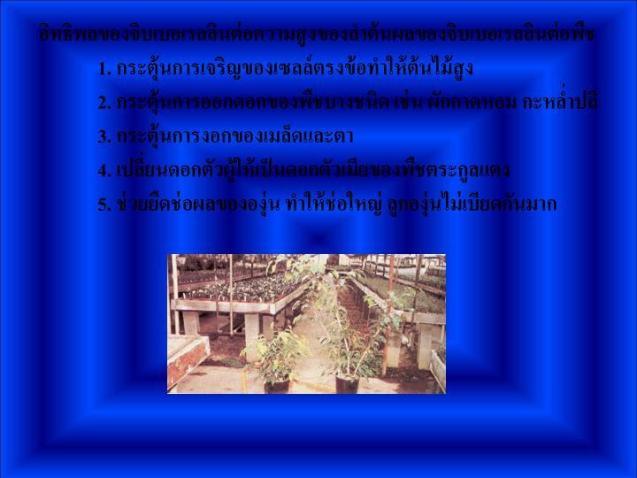อิทธิพลของจิบเบอเรลลินต่อความสูงของลำต้นผลของจิบเบอเรลลินต่อพืช